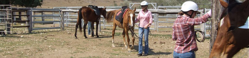 Australien Ranch Pferdetraining Cowboy