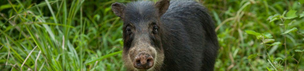 Costa Rica Nationalpark Tapir