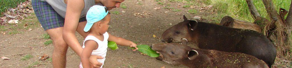 Costa Rica Nationalpark Besucher füttern Tapir