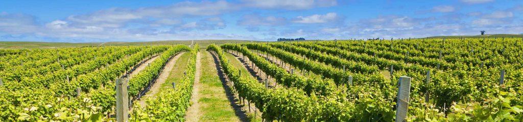 Weinanbau, Wineyard in Neuseeland