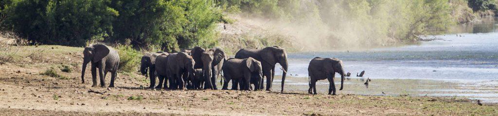 South Africa Waterhole Elephants