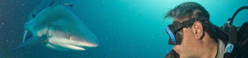South Africa Shark Diving