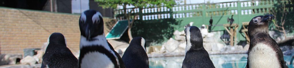 South Africa Penguins Cape Town
