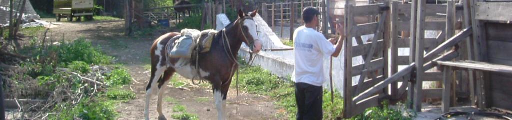 Farmaufenthalt in Chile