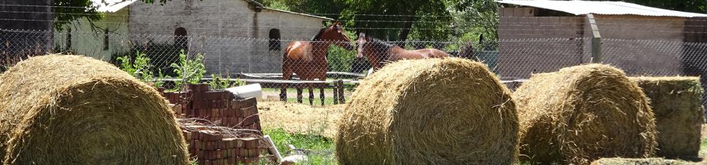 Pferdefarm in Chile