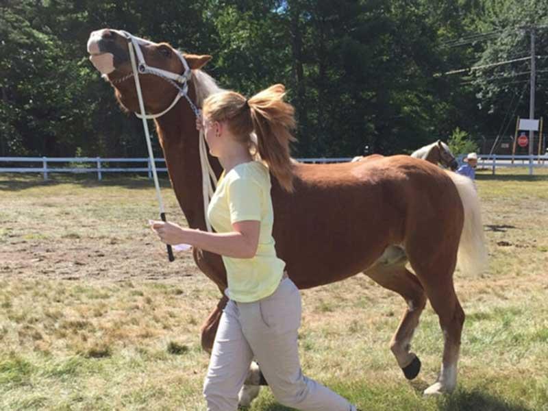 Mein Pferd in den USA